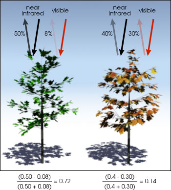 Normalized Difference Vegetation Index (NDVI) in Remote Sensing